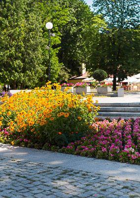 Miejska roślinność a estetyka